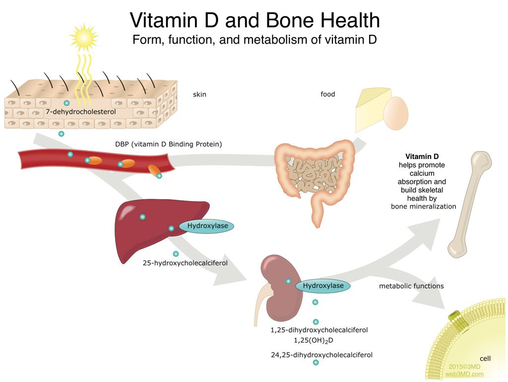 Jaw Bone Health Oral Health & Jaw Bone Disease prevention with vitamin D and calcium